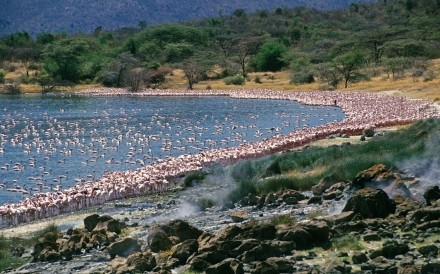 Flamingos Hot Springs Begoria