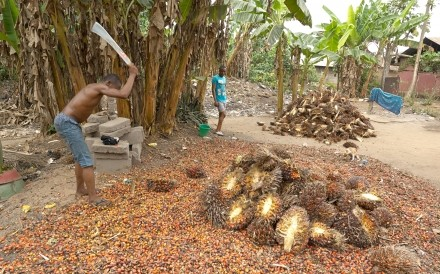 Making Palm Oil
