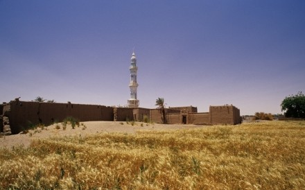 Cornfield And Mosque North Sudan