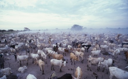Cattle Camp Padak Sudan 2