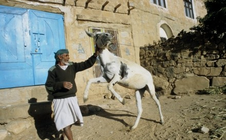 Man With Donkey Thula