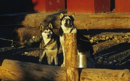 Huskies Ultima Thule